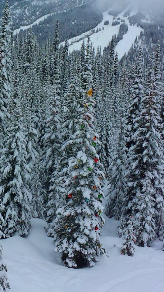 Decorated trees on Mt. Morrisey Sun Peaks Resort