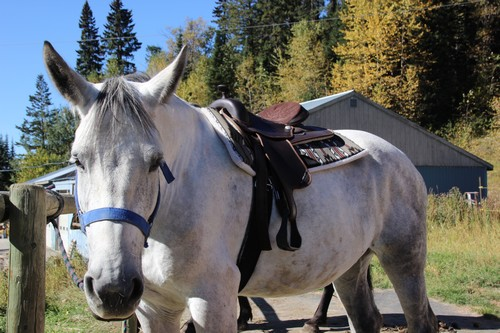 Sun Peaks Stable - pony rides