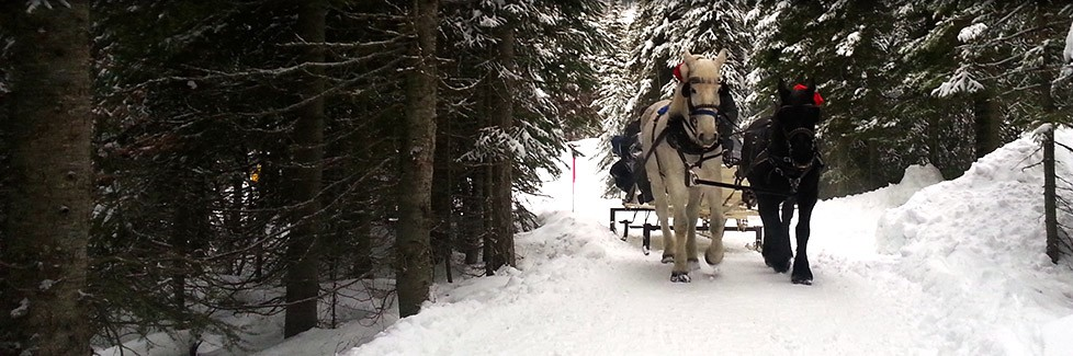 Sun Peaks Horse rides - sleigh rides through the village