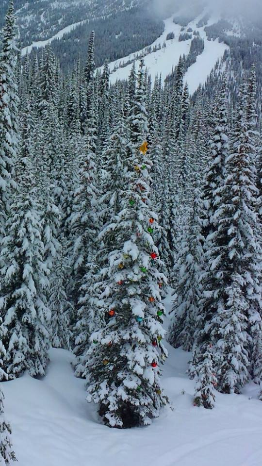 Decorated trees on Mt. Morrisey Sun Peaks Resort
