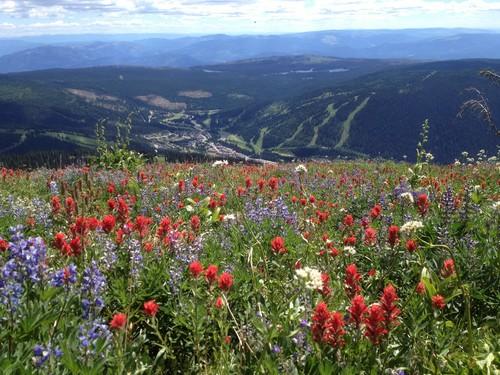 Sun Peaks biking through beautiful alpine meadows - photo by BestSunPeaks.com