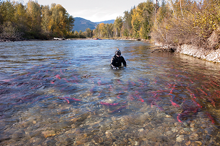 Jett Britnell capturing images of Adams River Sockeye Salmon Run