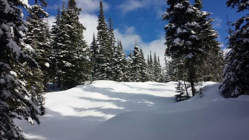 Fresh snowshoe tracks at Sun Peaks