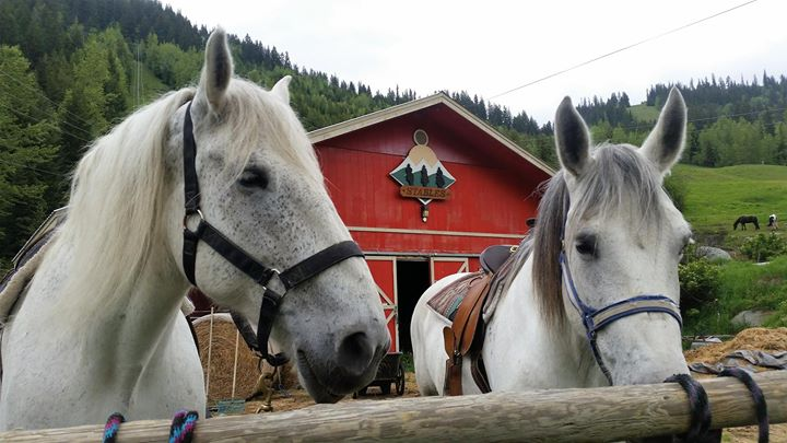 Sun Peaks Stables Horse Riding Lessons